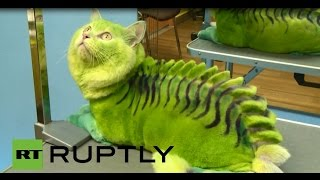Russia: Meet Vas'ka, the green DRAGON cat