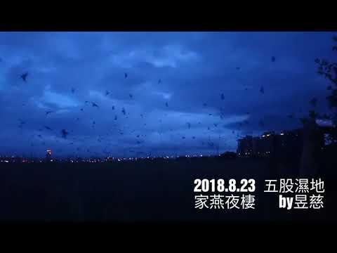 家燕夜棲 2018.08.23