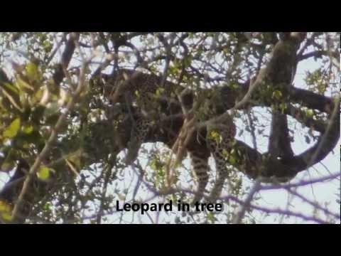 Kruger – Sunrise drive from Lower Sabie towards Crocodile Bridge