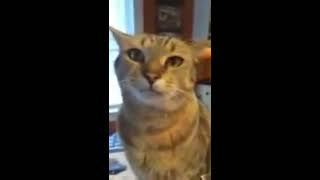 Cat Talks Back to Mom