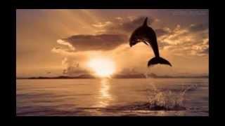 mensagem de Deus na Voz de Vavá Silva Venancio