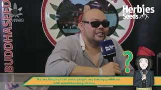 Herbie Interviews Big Buddha Seeds