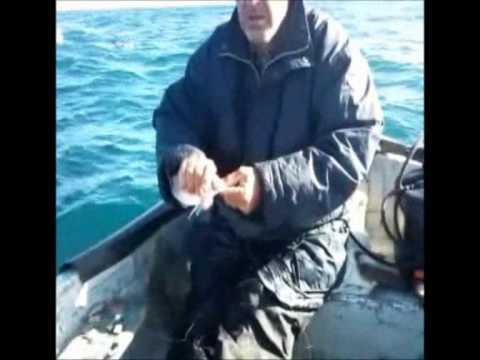 Pêche à la palangrotte, jean bart, Alger.wmv