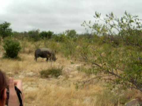 Cédric et Rhino
