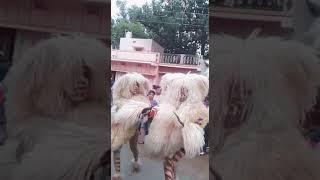 Sher dance in rjn :-(sheikh kashif:-)