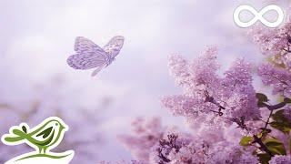 Relaxing Piano Music: Romantic Music, Beautiful Music, Soothing Sleep Music, Relaxing Music ★89