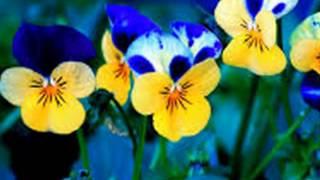 De colores-Nana Mouskouri