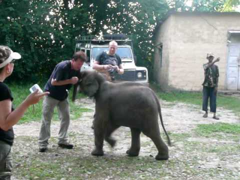 Nepal 2008 – Ray wrestles the baby elephant