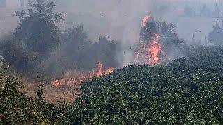 Floresta chilena continua a arder