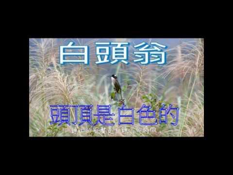 校園生態筆記~白頭翁