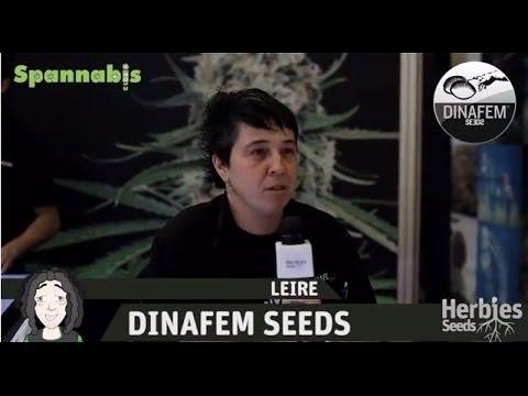 Dinafem Seeds @ Spannabis Barcelona 2013