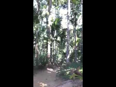 Lowanacherra National Park, Monkey viewing