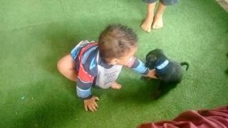 Brincando com o cachorro kkkkkk fofo