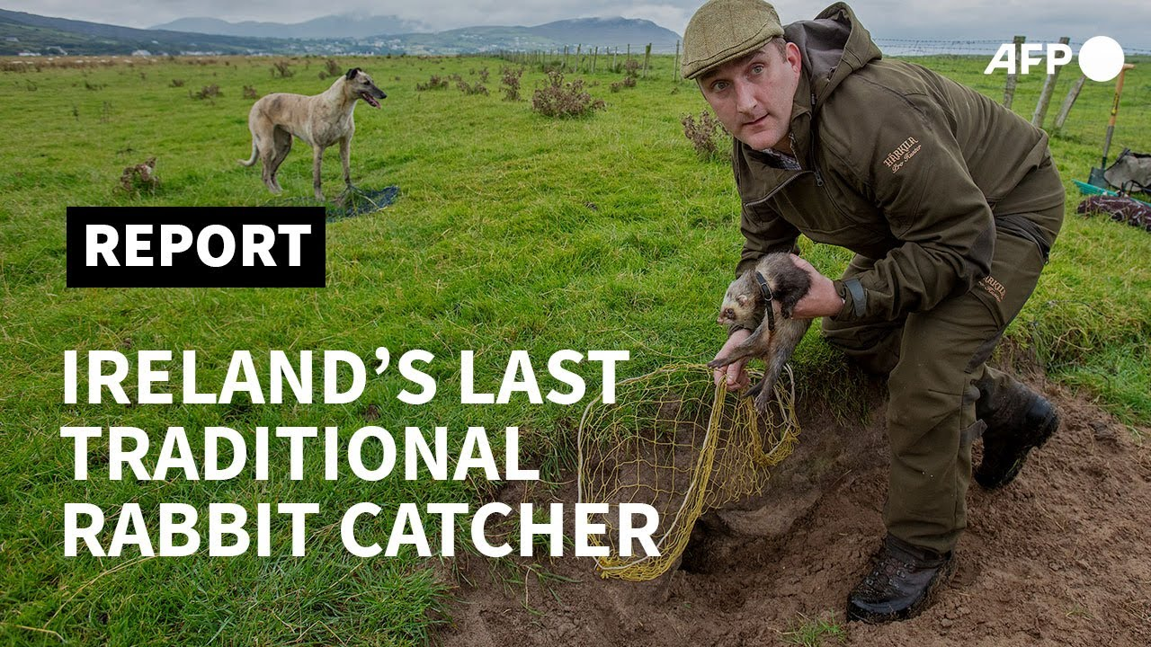 On Burrowed Time: Hunting with Ireland's last Traditional Rabbit Catcher