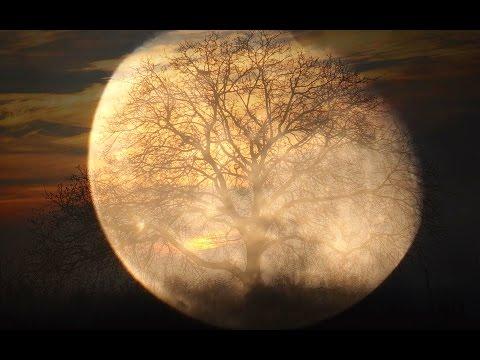ludwig-van-beethoven-moonlight-sonata-tomasz-trzcinski