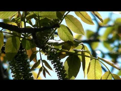 Природа Мелитополя | Nature of Melitopol
