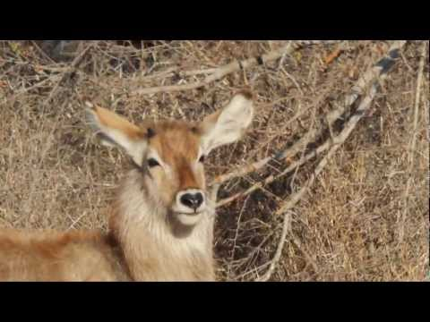 South Africa 2011 – Part 1 / 3