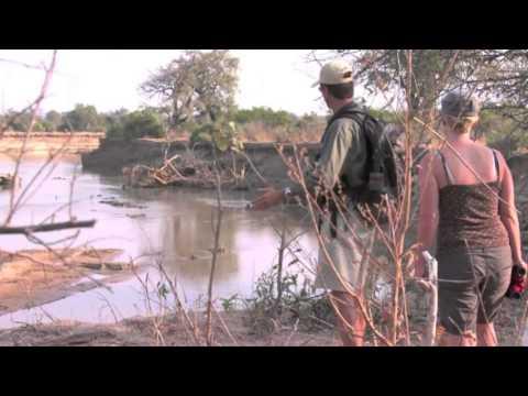 Zebra Plains | Zambia | Expert Africa