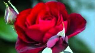 Julio Iglesias - A veces tú, a veces yo.wmv