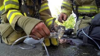 Fireman Saves Kitten - Hasič zachránil Koťě