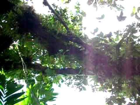 volcan mombacho nicaragua bromelia