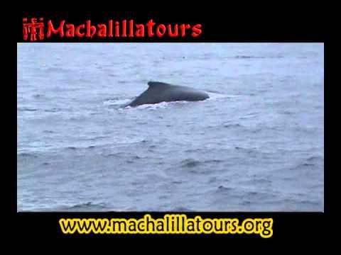 Observacion de Ballenas Jorobadas, Puerto López, Parque Nacional Machalilla, Humpback whalewatching