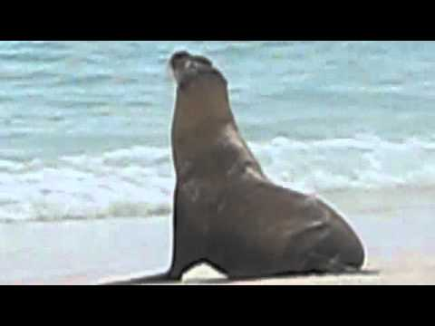 the lazy sea lion