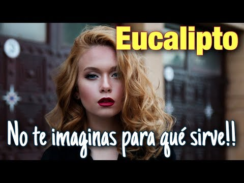 Eucalipto: todas sus propiedades y usos - Vídeo