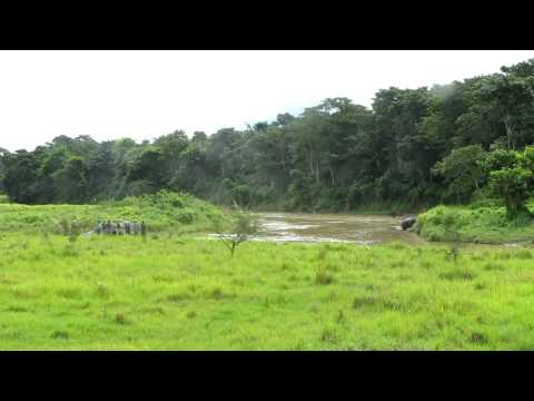 rhino at chitwan with tourists watching MVI_3550