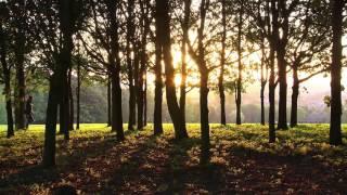 Unknown Brain-Inspiration   Walking Through Trees At Sunset