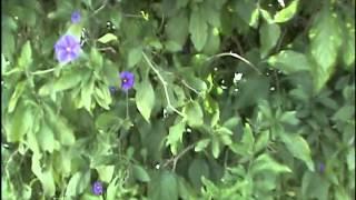 Video de Jardim