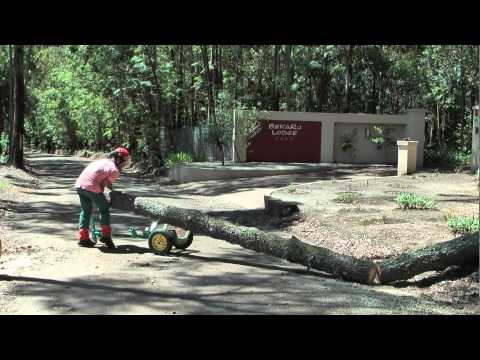 Bekaru Tree Part 5 Felling of a 30 m high dead pinetree and use of Arbor Trolley