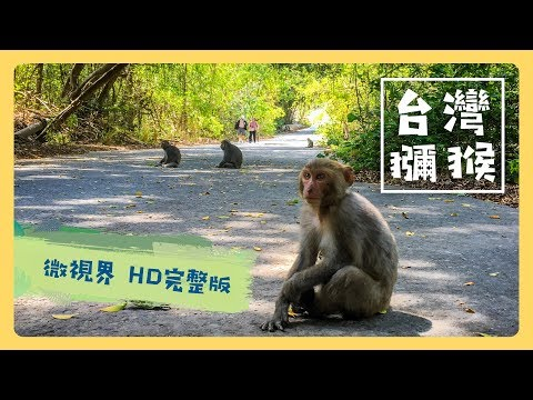 台灣獼猴 - 公視《台灣特有種》微視界HD版 Episode#5