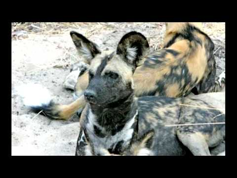 How to Best Tour Africa by Lion Dog African Safaris