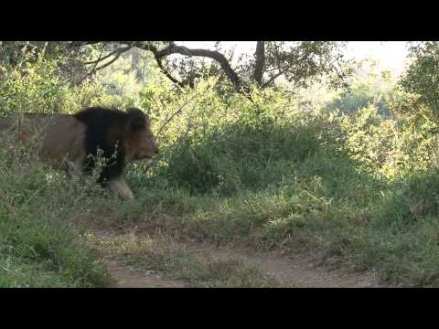 South Africa : Safaris et Animaux Sauvages