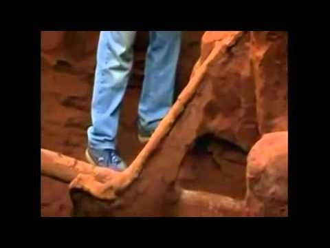 Karınca Yuvasına 10 ton çimento dökülürse