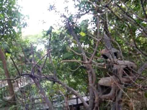 parque historico 10 guayaquil ecuador