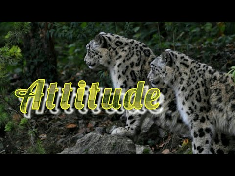 Download thumbnail for New WhatsApp status || Attitude