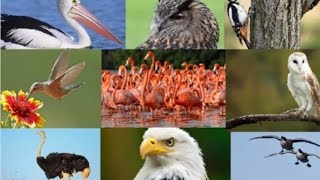 15 Amazing Facts About Birds
