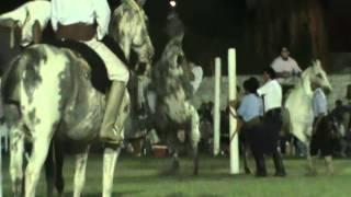 jineteada de chazon de Alexis Bergara!!!! 19-01-2013..