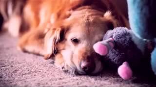 God Made A Dog (enhanced)