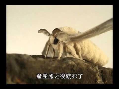 國小_自然_昆蟲的變態【翰林出版_四下_第二單元 昆蟲王國】 - YouTube