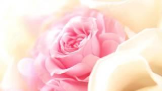 "528Hz Healing Music Album ""Rose Flower Meditation"" Preview / grace aya, AKEMI &Yuusuke"