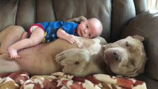 Baby Lays on Dog