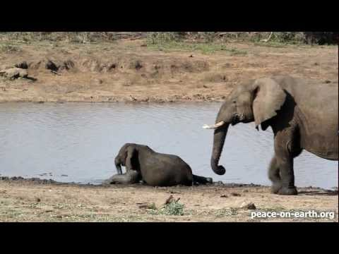 Intimate Bond – An Elephant Family in Kruger National Park, S. Africa