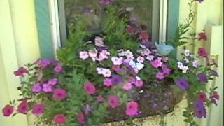 Gothic Arch Wooden Greenhouse 2010 avi