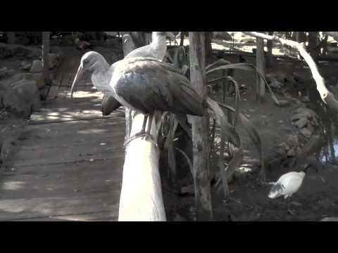 World of Birds Near Cape Town South Africa