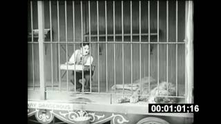 Charlie Chaplin's Lion's Cage 2 minutes scored