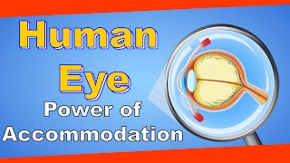 Class 10 science Power of accommodation of the human eye Grade 10 science (Human Eye) | LetsTute
