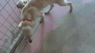 Zypernhund Tala2
